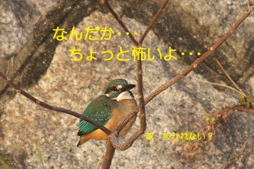 090_20110123204052.jpg
