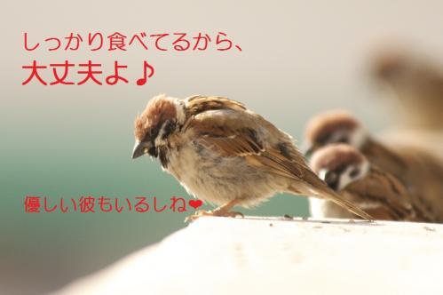 090_20110131212407.jpg