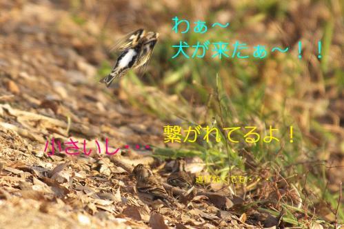 090_20110209221701.jpg
