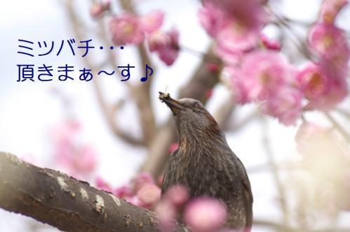 090_20110311011025.jpg