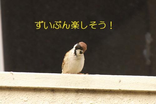 090_20110415020102.jpg