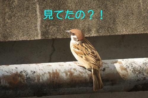 090_20110430201915.jpg