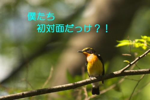 090_20110504210038.jpg