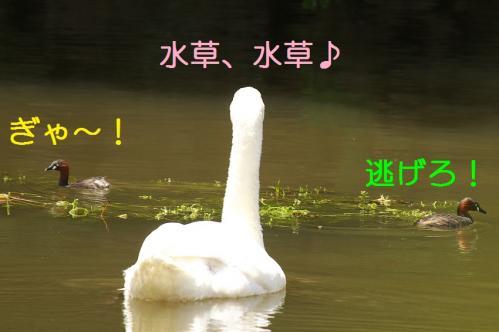 090_20110531202315.jpg
