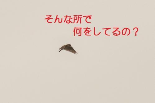 090_20110608221359.jpg