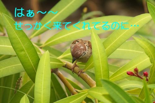 090_20110621205308.jpg