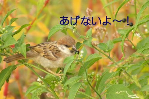 090_20110808211747.jpg