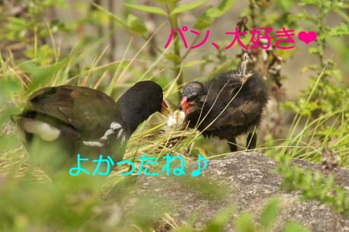 090_20110830214319.jpg