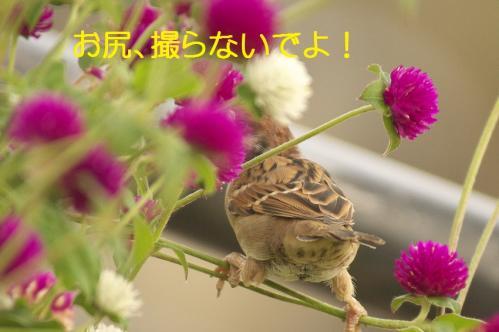 090_20111002232558.jpg