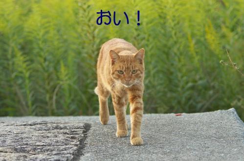 090_20111004221559.jpg