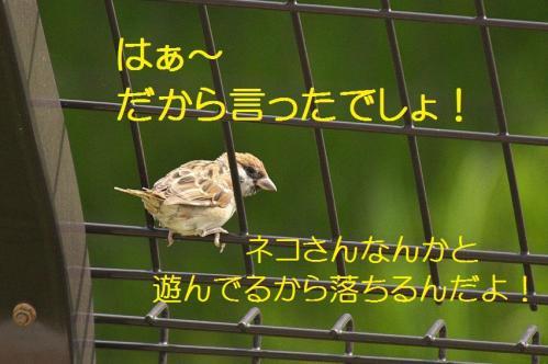 090_20111005213530.jpg