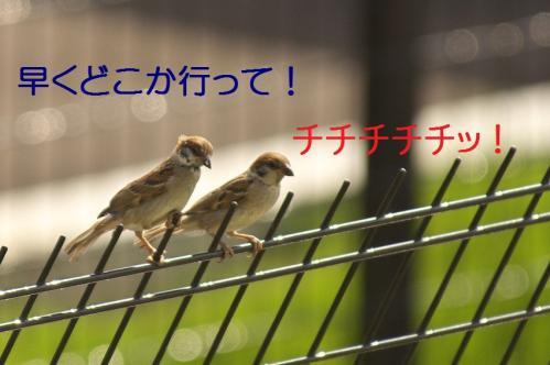 090_20111006190938.jpg