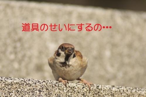 090_20111009230241.jpg