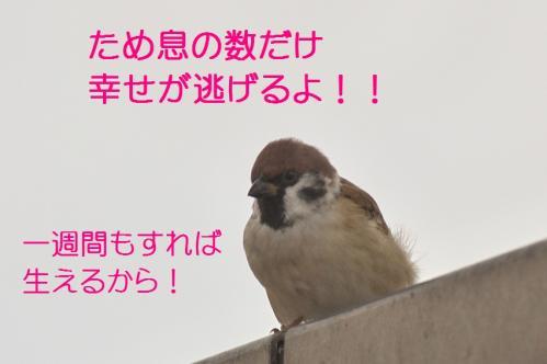 090_20111012232521.jpg