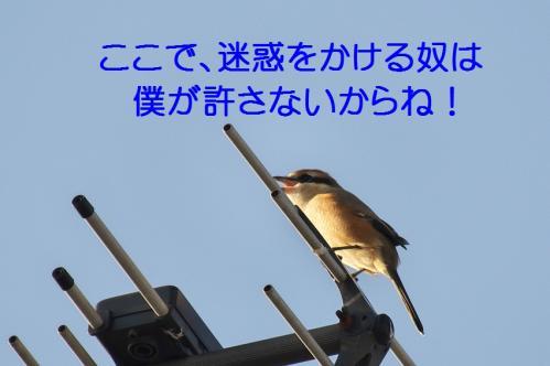 090_20111017220540.jpg
