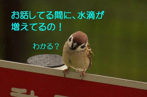 090_20111022183030.jpg