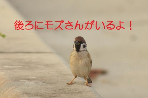 090_20111128225110.jpg