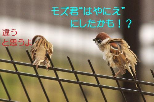 090_20111227210009.jpg