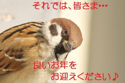 090_20111230192705.jpg