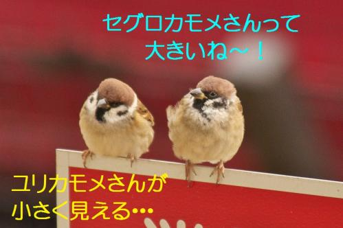 090_20120108212417.jpg