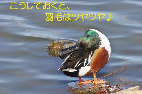 090_20120125231839.jpg