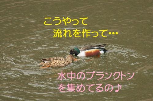 090_20120319224837.jpg