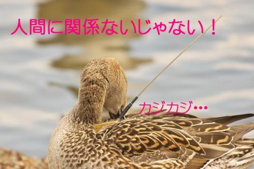 090_20120414204546.jpg