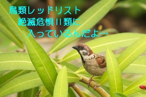 095_20110621205307.jpg