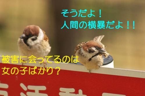 095_20120414204545.jpg