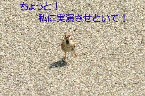 09_20100831203121.jpg