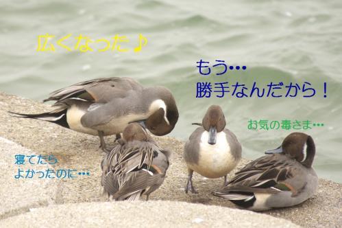 100_20101210214603.jpg