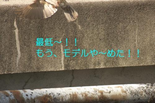100_20110430201914.jpg