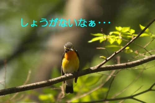 100_20110504210037.jpg