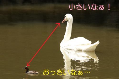 100_20110531202315.jpg
