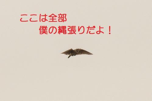 100_20110608221358.jpg