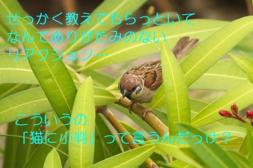 100_20110621205306.jpg