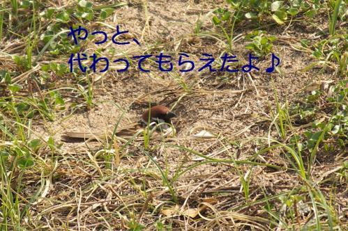 100_20110630202716.jpg
