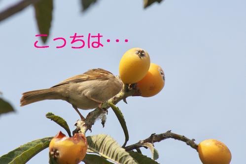 100_20110705202827.jpg