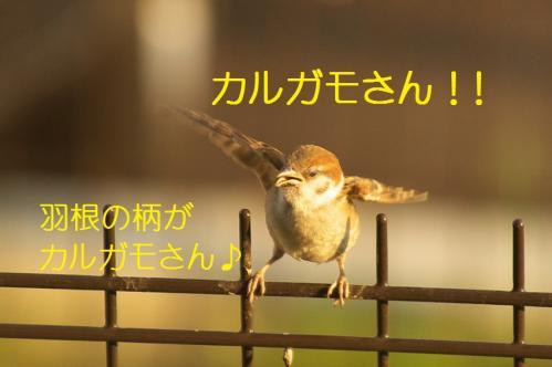 100_20110801222505.jpg