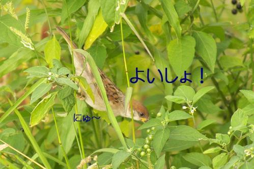 100_20110808211746.jpg
