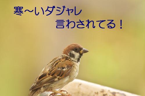 100_20110829224908.jpg