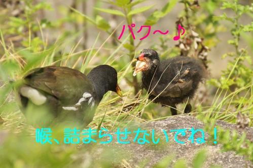 100_20110830214318.jpg