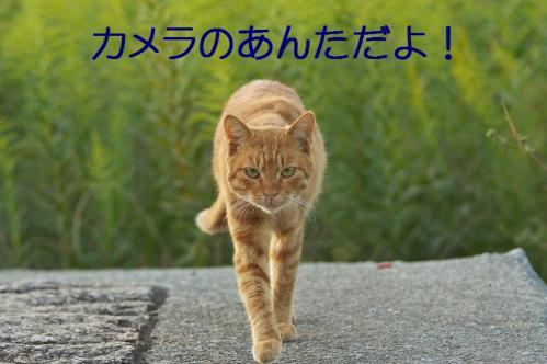 100_20111004221558.jpg