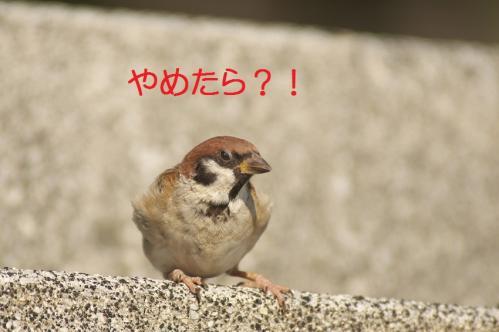 100_20111009230241.jpg