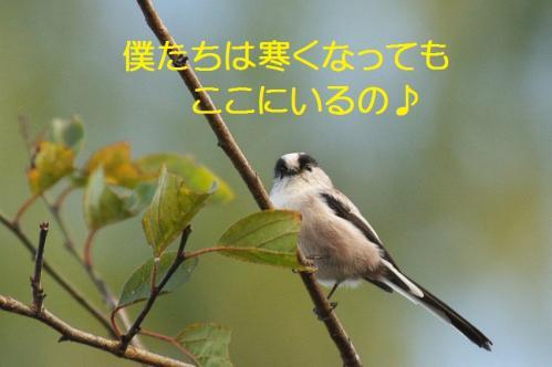 100_20111016185226.jpg