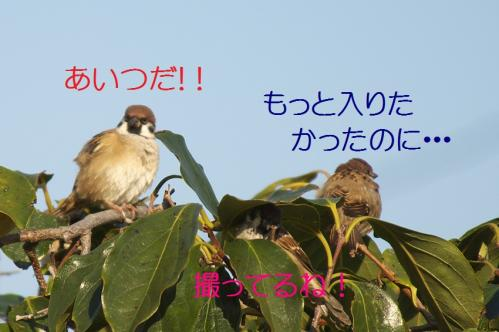 100_20111017220539.jpg
