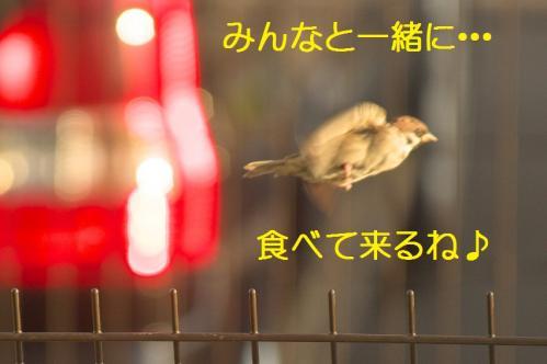 100_20111027194632.jpg