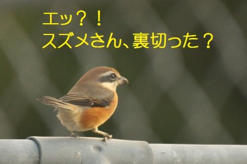 100_20111128225109.jpg