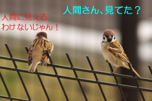100_20111227210118.jpg