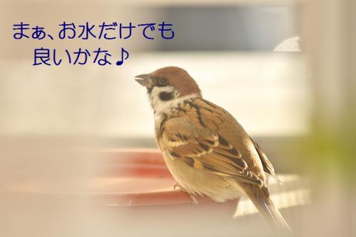 100_20111228225546.jpg